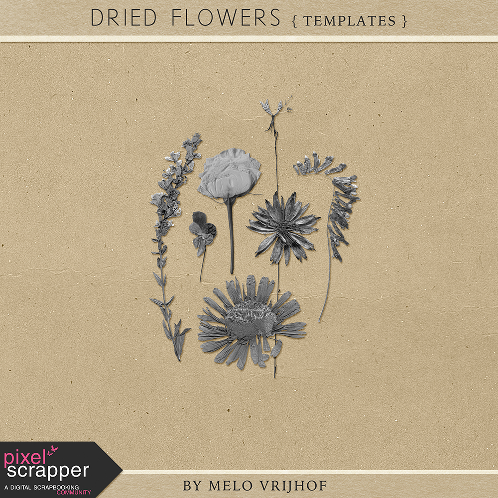 2016-04-28-DriedFlower-Templates